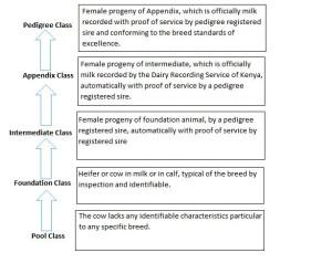 pedigree-cows-diagram