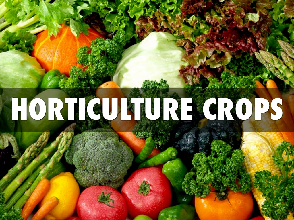 Requirements needed to export Horticultural Crops in Kenya