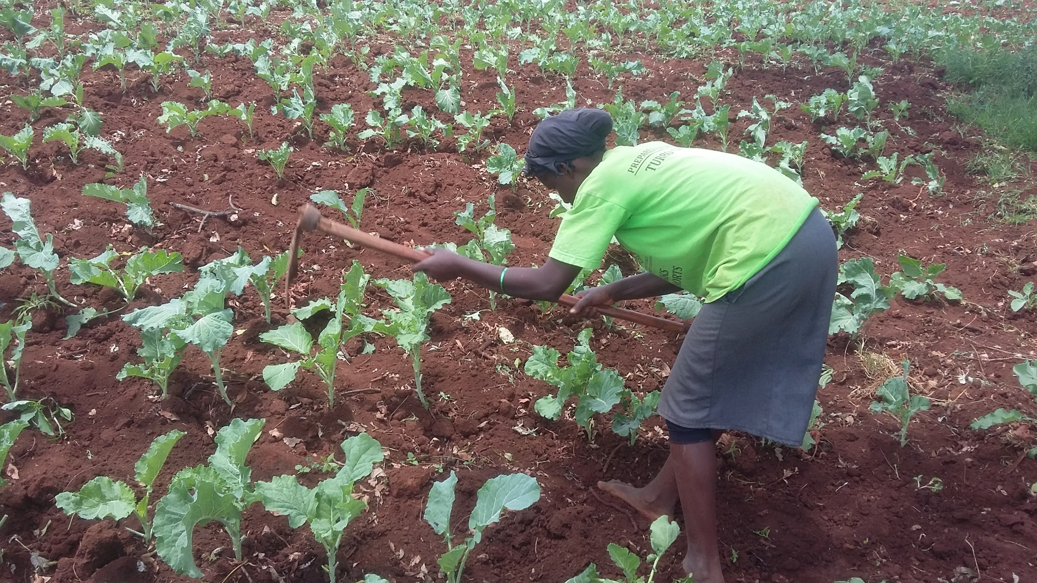 Photo of Profitable vegetables to grow during the dry season