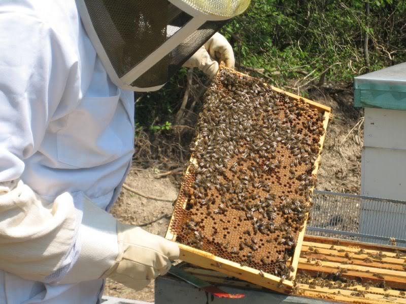 Photo of Why You Should Start Keeping Bees