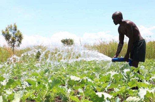 Photo of Sukuma Wiki Farming is Profitable