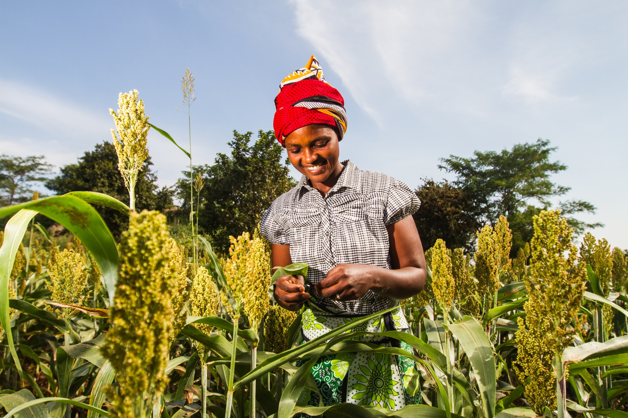 Photo of Agriculture in Kenya is more than you think