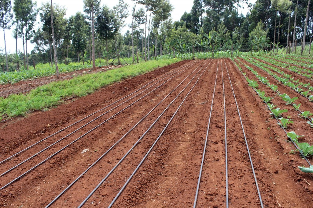 How To Start Farming With Little To No Capital
