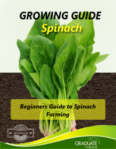 Spinach cover page