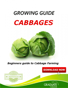 advert2-cabbage