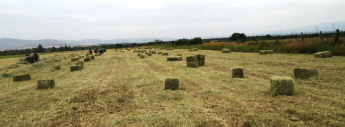 Photo of Lessons Learnt In Hay Baling