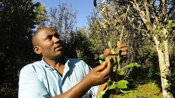 Photo of Growing Apples in Kenya: The Story of Wambugu