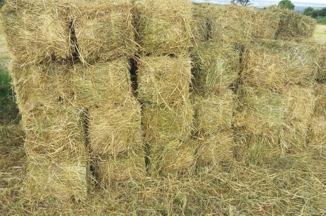 Photo of How to grow Boma Rhodes Grass