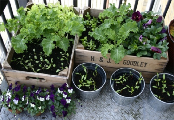 Portable Farming Growing Vegetables on Your Balcony