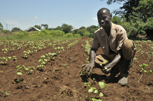 Photo of Africa's Growth lies with Smallholder Farmers