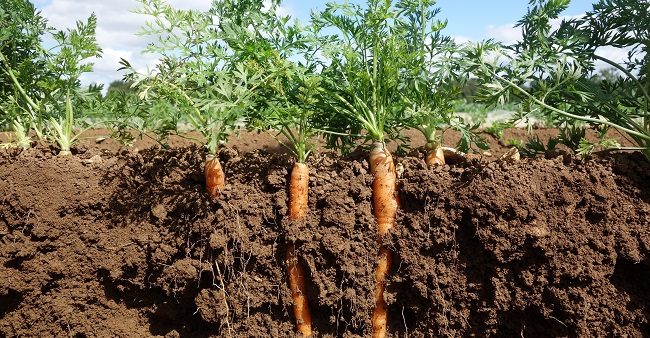 Photo of Improve production by testing your soil