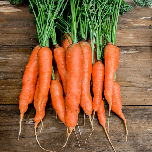 Photo of Best way to grow Carrots