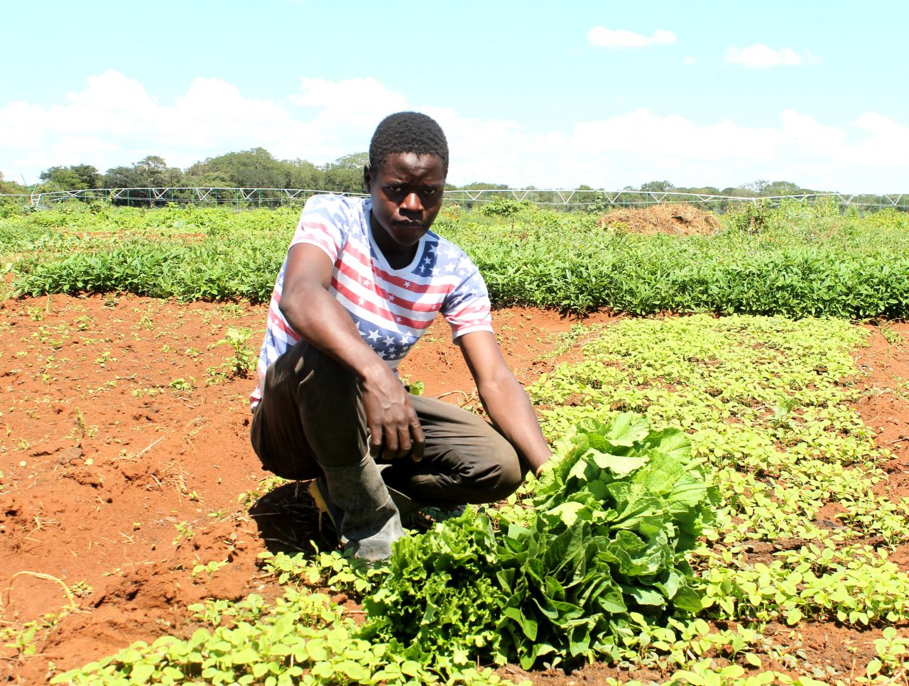 Photo of Food Security threatened as farmers move to other more lucrative jobs