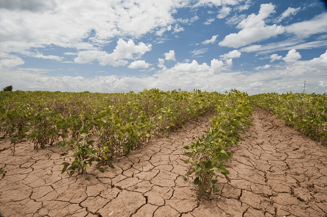 Photo of Lessons learnt during the 2019 drought in Kenya