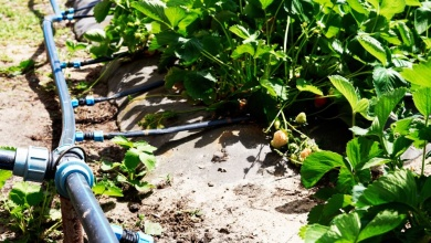 Photo of How to irrigate plants and apply fertilizer at the same time