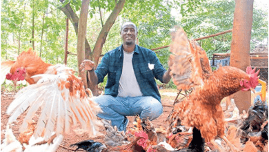 Photo of Kienyeji chicken farming is the way to go