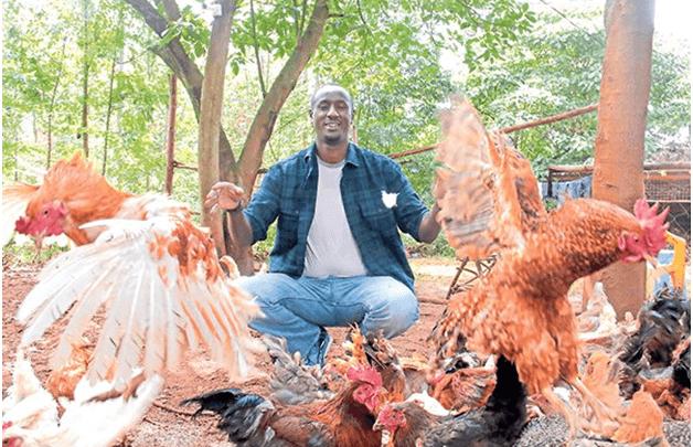 kienyeji poultry farm