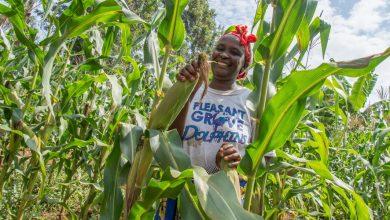 youth and farming kenya