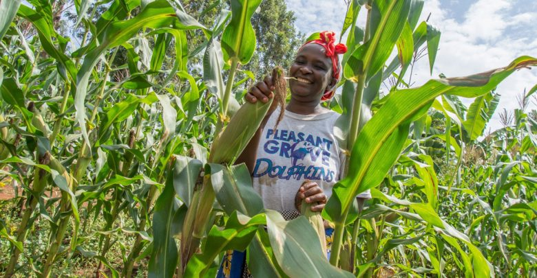 youth and farming kenya