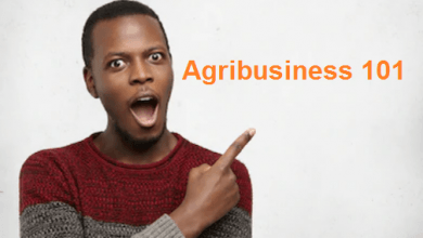 agribusiness and youths