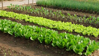 Photo of Get assured market access for your crops by growing in small portions